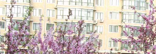 哈尔滨·盛开的桃花