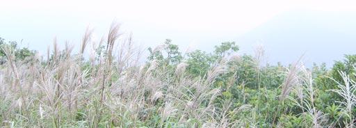 梧桐山·山顶上的茅草·芦苇