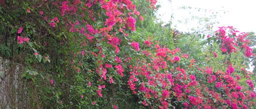 白云山·山底鲜花盛开